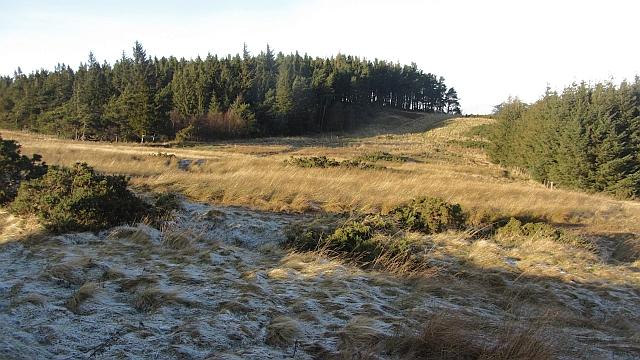 White Hill Plantation