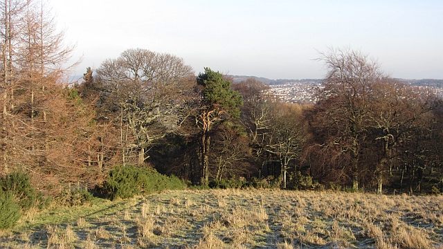 Pentland woodland