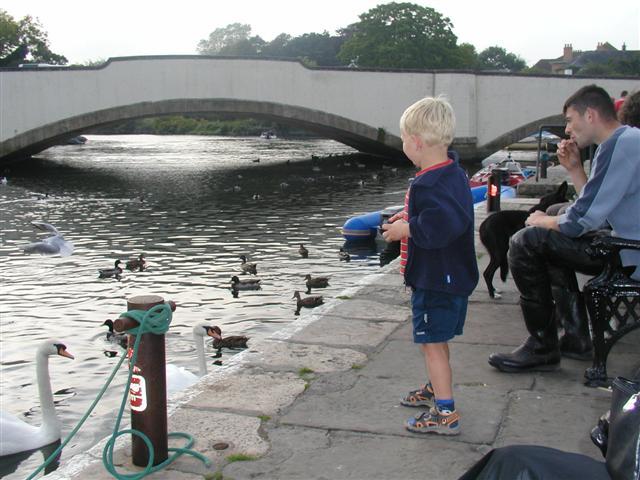 Feeding birds, Wareham