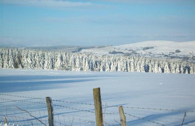 Caemor wood in snow