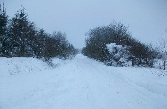 Caemor in snow
