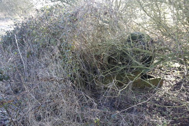 Trailer covered in brambles