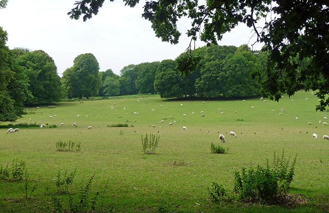 Parkland near Hinton Ampner