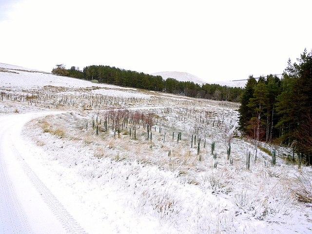 Track to Uswayford near Murder Cleugh