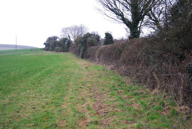 Footpath along the hedge