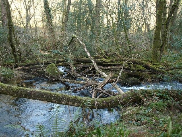 Build-up of trees, West Webburn River