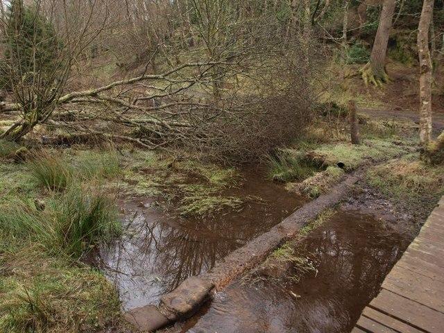 Burn, fallen tree, track in Mugdock Country Park
