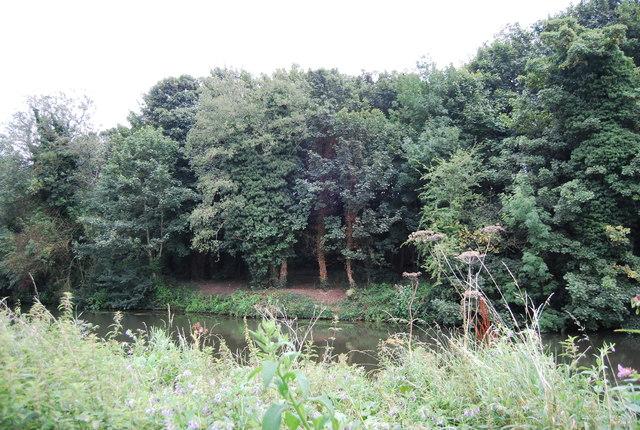Riverside woodland