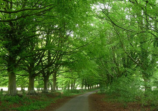 Country road near Kilmeston