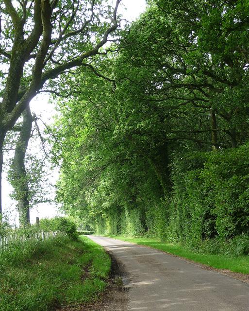 Punsholt Lane near West Tisted