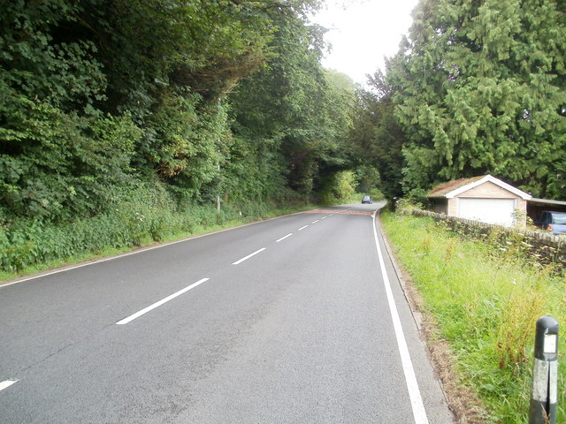 Tree canopy over the A40 west of Sennybridge