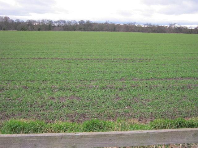Farmland seen from the A167 near Croft-on-Tees