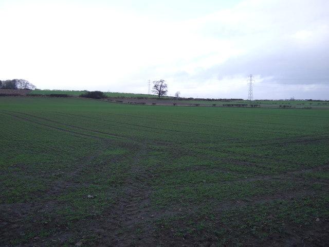 Farmland off Ripon Road