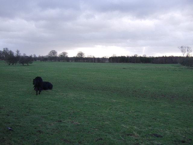 Grazing land south of Nidd Lane