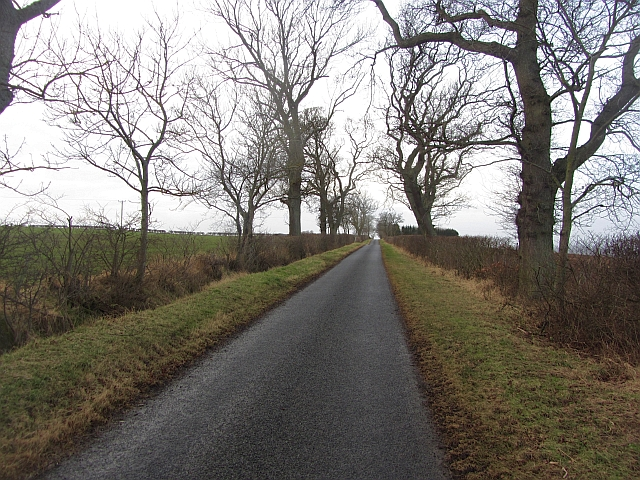 Tree lined road, Nottylees