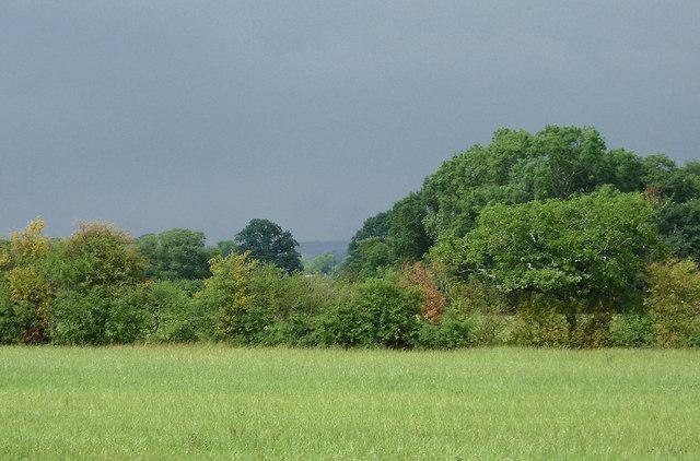 Farmland and trees near Hack Green, Cheshire