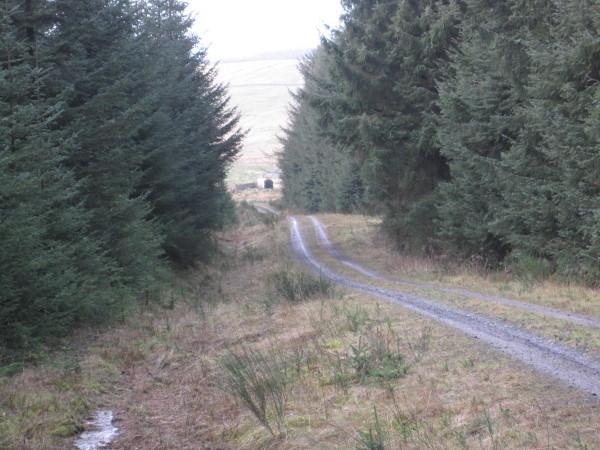 Forest Track leading towards Blue Hemmel