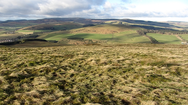 Rough grazing on Meigle Hill