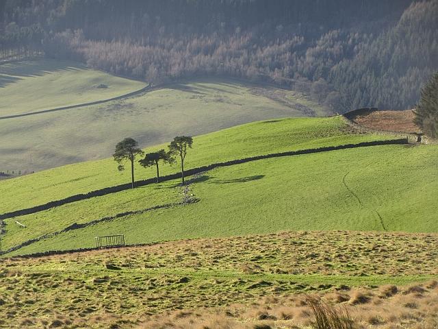 Farmland on Meigle Hill