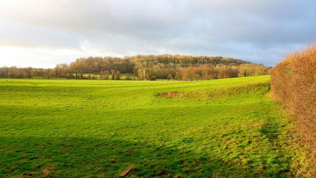Callow Hill Wood