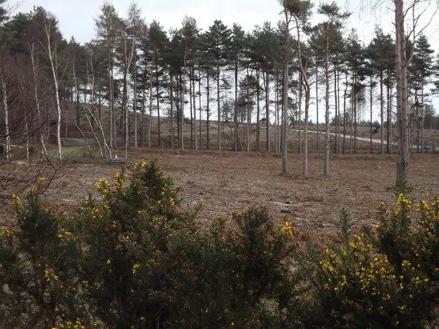 Farnham Heath Nature Reserve
