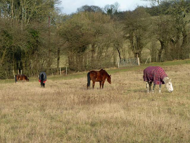 Horses in Furze Bottom