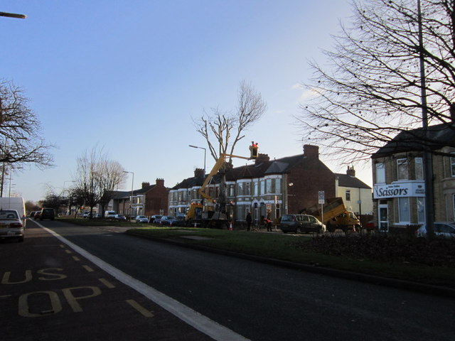 Trimming the trees on Holderness Road