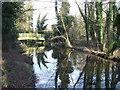 TQ5263 : River Darent near Lullingstone by Malc McDonald