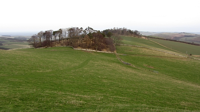 Woodland, Venchen Hill