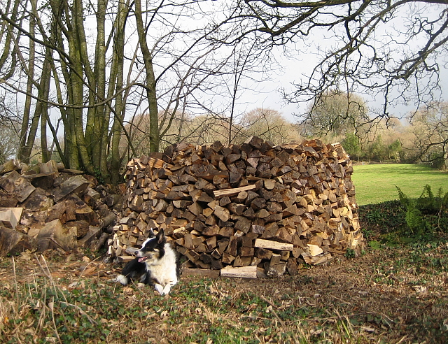 A Very Neat Woodpile