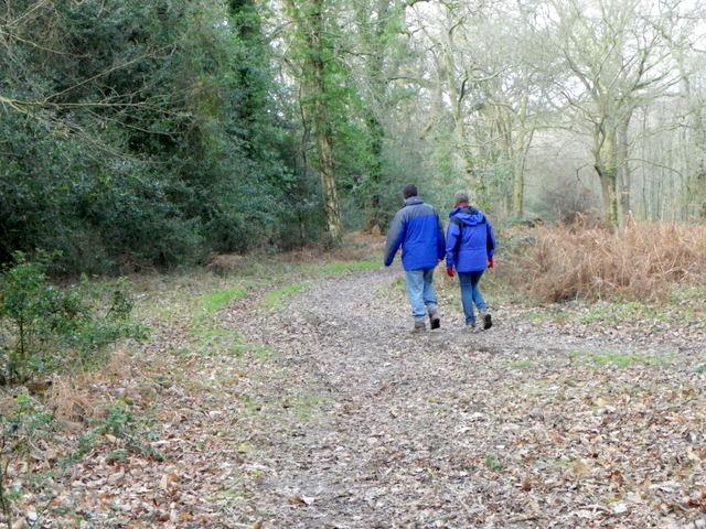 Walkers in Godshill Woods