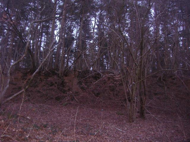 Ellix Wood, Abinger Common