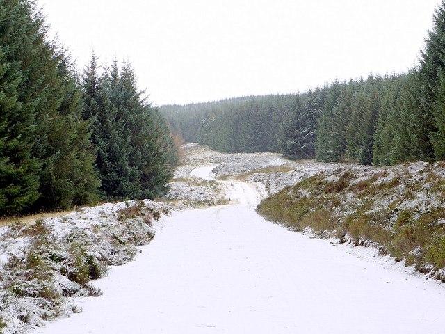 Forest track below Butt Roads