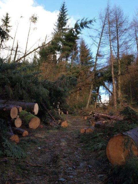 Fallen trees by Cruach Tairbeirt path