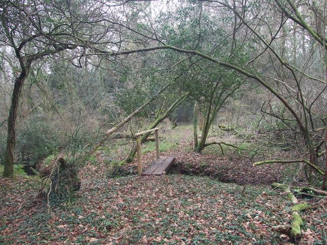 Footbridge, Holt Forest