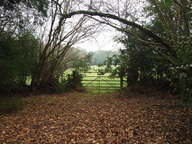 Gate, Holt Forest