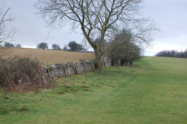 Winchcombe Way climbs towards Belas Knap