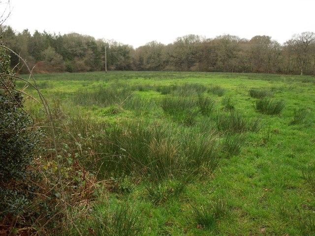 Rushy field by the B3215