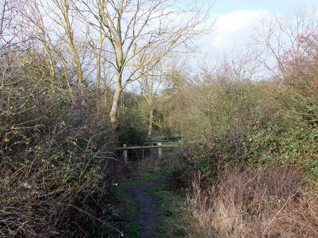 Pathway in Langdon Nature Reserve