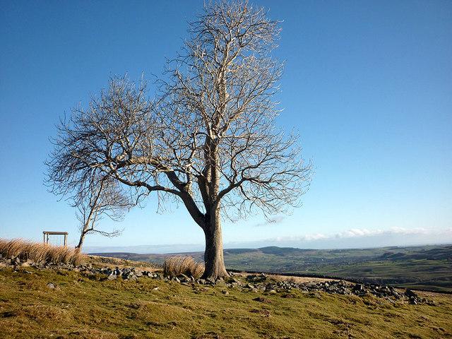 Large tree at Pin Gate