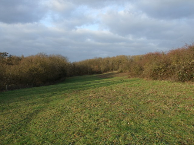 Meadow in Langdon Nature Reserve