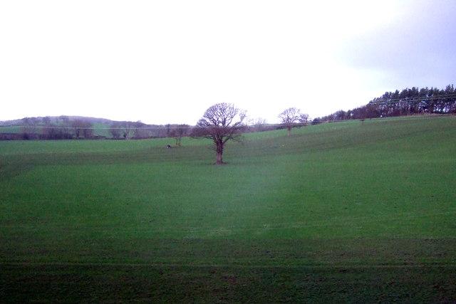 Farmland, Wescoe Hill