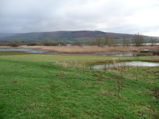 Part of the margins of Llangorse Lake in winter