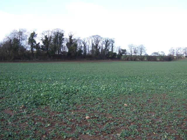 Farmland off Thwaites Lane