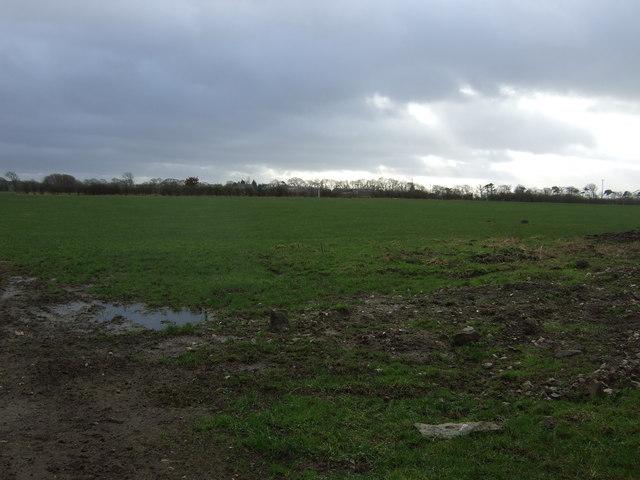 Farmland, Thornton Moor