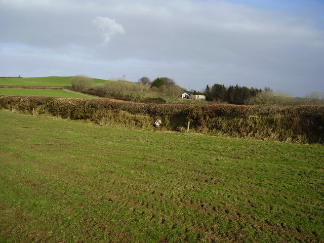 A North Devon hedge and bank