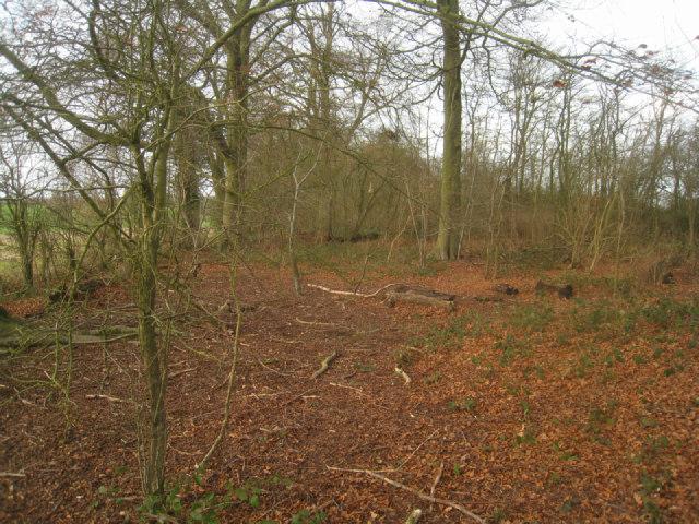 Woodland between fields