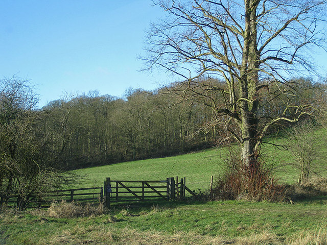 Slingsby Banks Wood