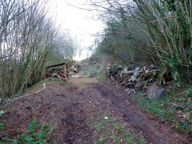 A bit of woodland management