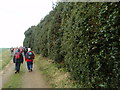 SP9532 : Holly hedge by Michael Trolove